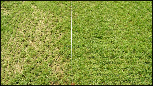 Wichita Overseed Ask For Your Free Estimate Today And Save